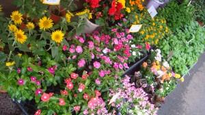 季節の花々が手頃な価格