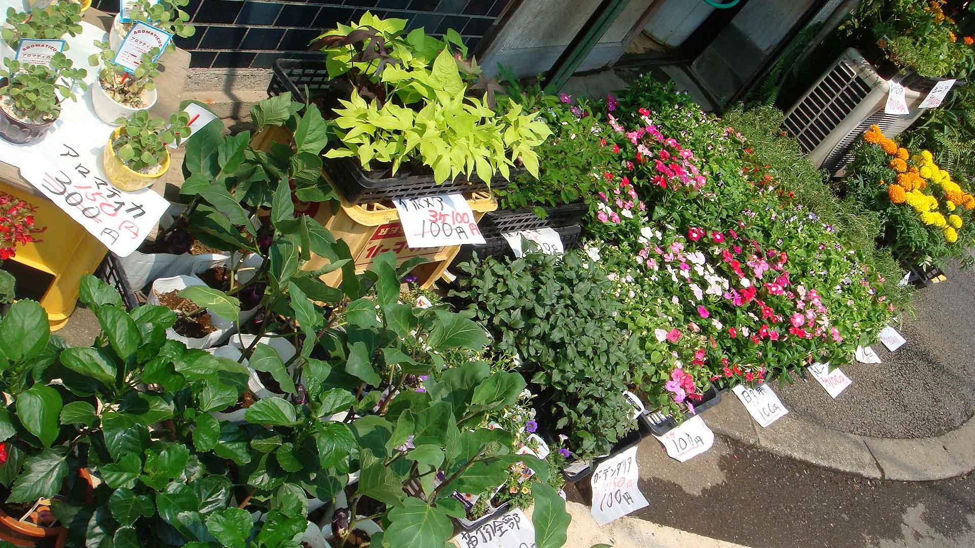 季節の花々を低価格で提供